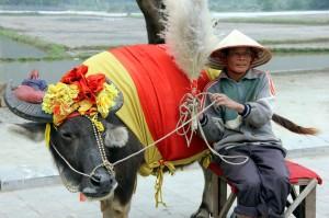 VietnamBufalo