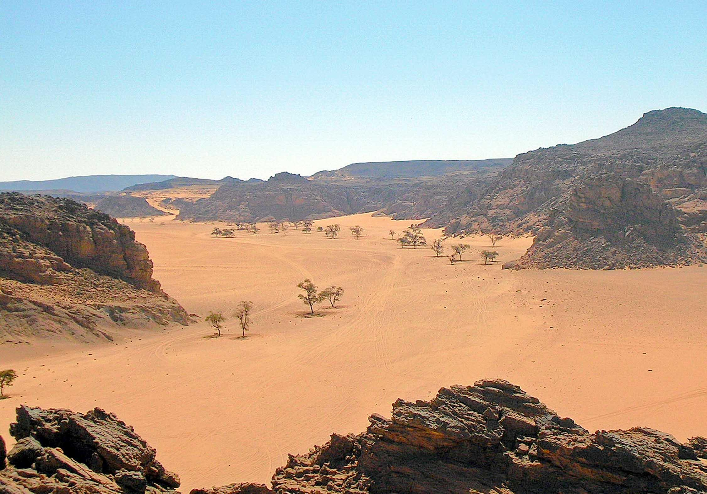 Sudan viaggilife - Immagini del cardellino orientale ...