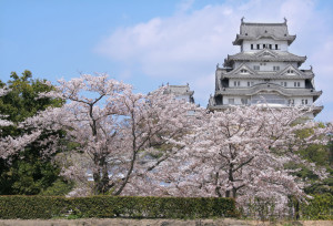 Himeji castle and cherry blossom Japan