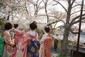 Girls dressed as maiko or geisha enjoy the cherry blossom flowers, at cherry blossom season, in Gion, Kyoto, Japan.. Image shot 2012. Exact date unknown.