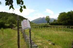 Azienda agricola Terre Sparse nella campagna piemontese