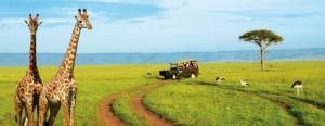 Safari fra le giraffe in Kenya