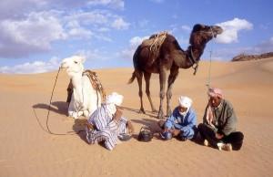 Cammelli nel deserto in Algeria