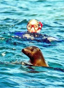 Le otarie nuotano nel Mar di Cordez nella Baja California