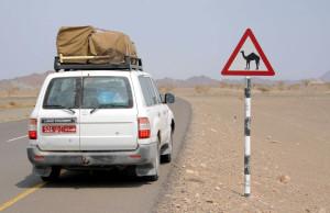 Oman, il cartello indica la presenza di cammelli