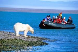 Svalbard, orsio polare