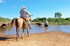 Brasile, si va a cavallo