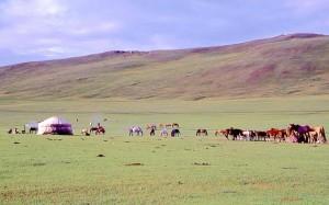 Mongolia, gher e cavalli