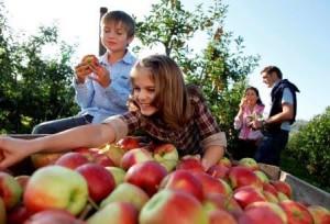 Lago di Costanza, festa della mela