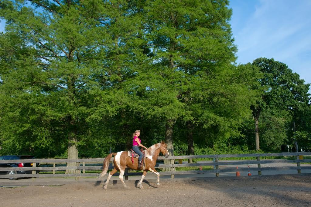 New York, a cavallo nella Grande Mela