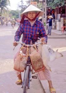Vietnam, donna con oche