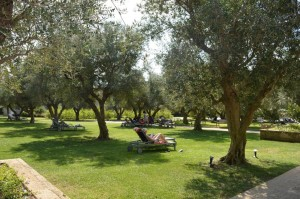 Iberotel, relax fra gli ulivi