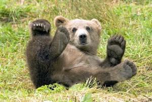 Croazia, Plitvice, l'orso bruno