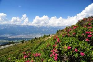 Innsbruck, sentiero dei cembri