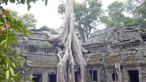 Cambogia, Angkor, vegetazione