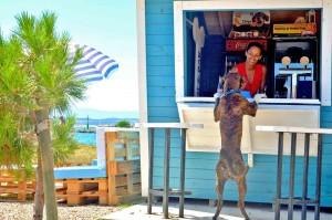 Croazia, se ha sete il cane va al bar