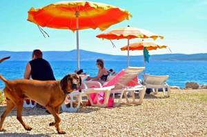 Croazia, il cane può giocare in spiaggia