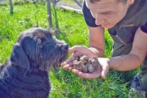 Tartufi appena trovati da un abilissimo cane