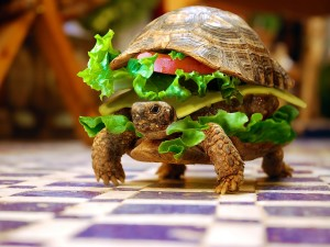 La tartaruga nell'hamburgher