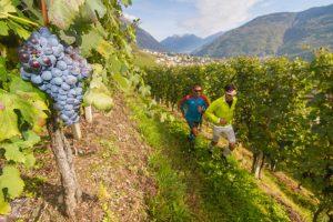 Valtellina, vine trail