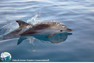 Taranto, delfini