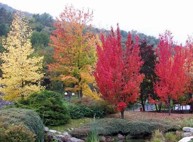 FoliageAosta1A