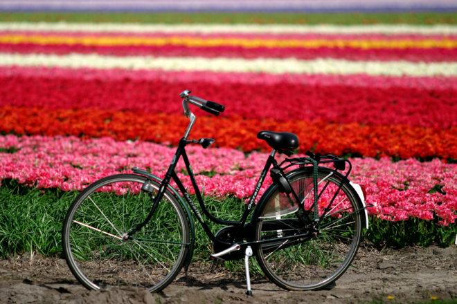 campo di fiori con biciHaarlem_300dpi_3072x2048px_J